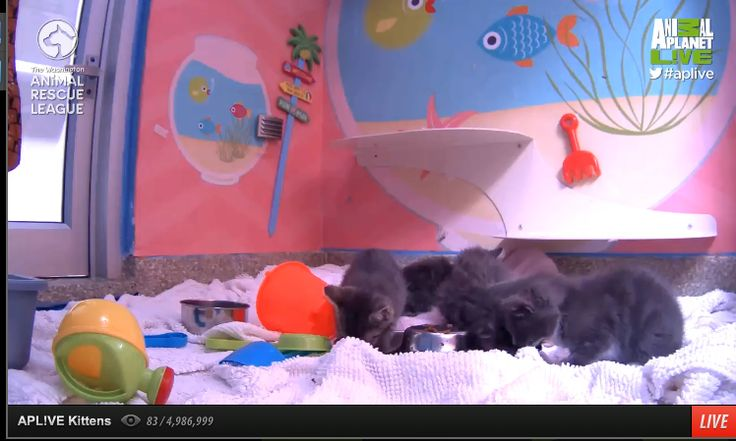 Animal Planet Live - Puppy Cam | Live Webcams | Pinterest | Animal ...