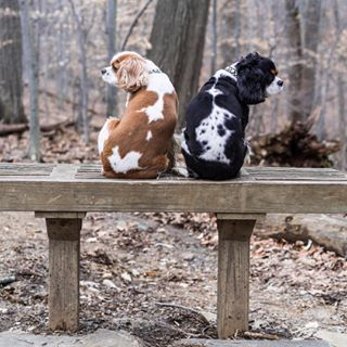 Here they are sitting on a bench waiting for their dates to arrive. | Community Post: 24 Times Julianne Hough's Dogs Were Too Damn Cute On Instagram