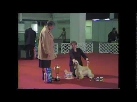 Budapesti kutyakiállítás.Régebbi felvétel.