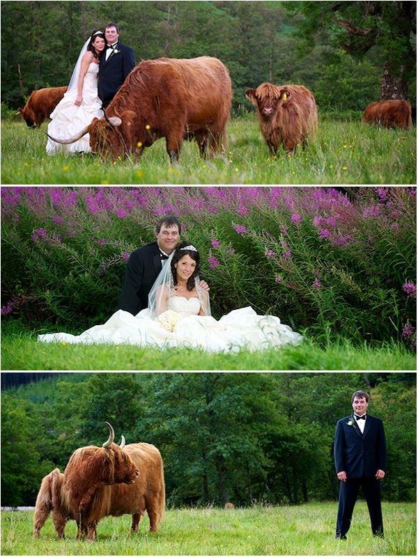 никогда картинки теленок который невеста сибэкстрим