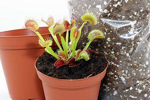 Les 25 meilleures id es de la cat gorie plantes carnivores for Plante carnivore 01