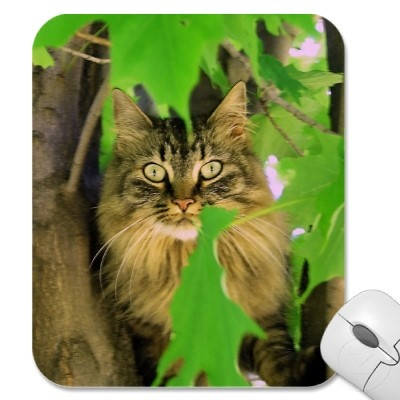 Shasta on a mouse pad