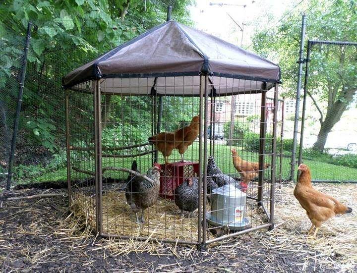 20 best urban homesteading images on pinterest urban for Gazebo chicken coop
