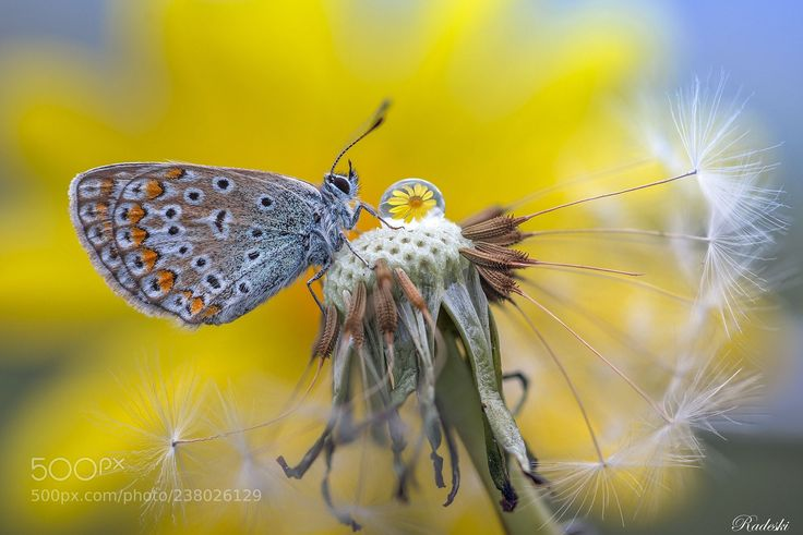 Butterfly among the flowers (Roberto Aldrovandi / Reggio Emilia / Italia) #nikon D800E #macro #photo #insect #nature