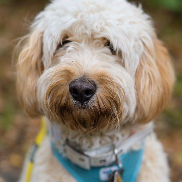 Konsequenz In Der Hundeerziehung Hundeerziehung Hunde Welpen