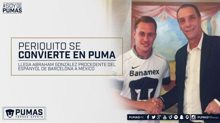 Periquito se convierte en Puma   Sitio Oficial del Club Universidad Nacional A.C.