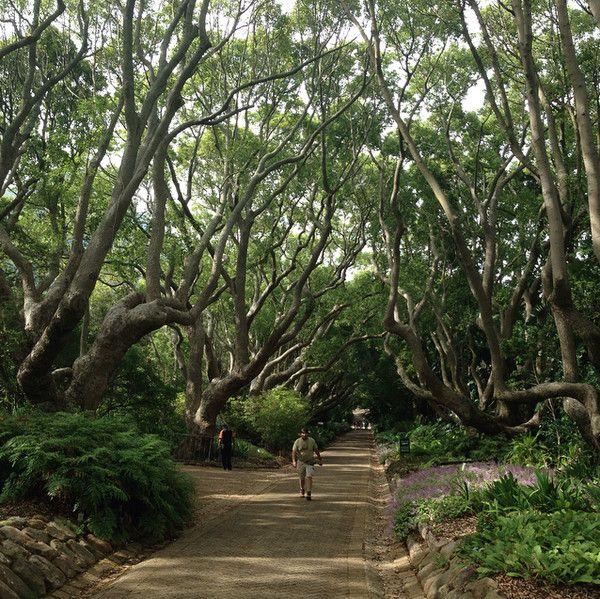 See: Kirstenbosch Botanical Garden