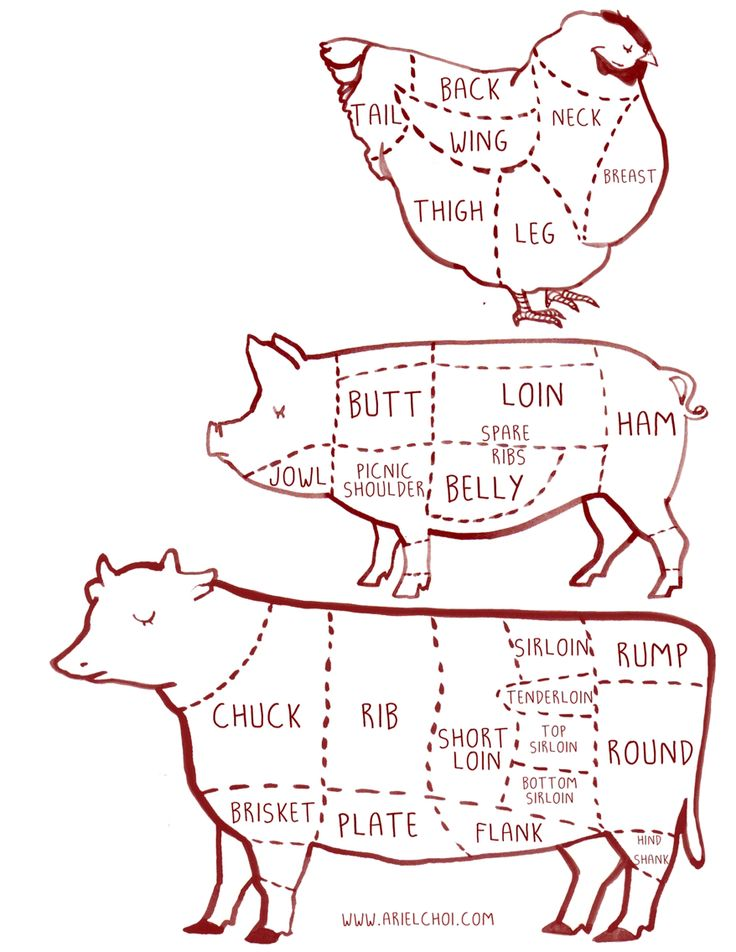 cow, pig, chicken butcher diagram chart illustration |illustration by Ariel choi