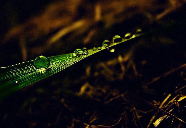 Green magic drop