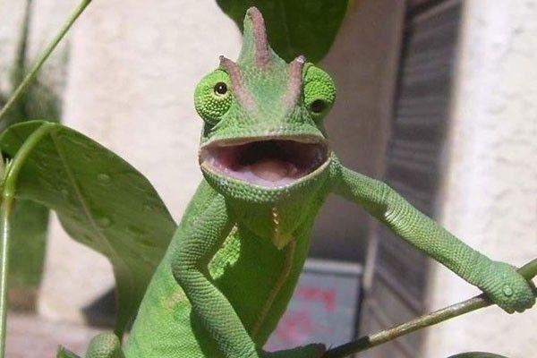 Este camaleón