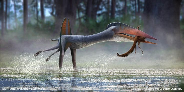 During the late Cretaceous, Transylvania was an island that hosted one of the largest pterosaurs of all time. Now, scientists think that this giraffe-sized stork-like reptile might have also been the island's arch-predator.