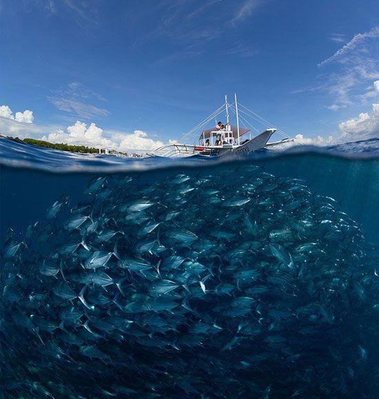 Go diving Underwater Photography