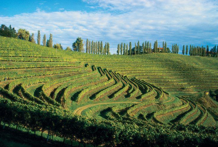 Vineyard | Vineyard ergonomics ...
