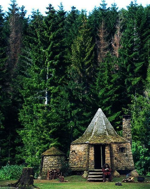 Forests the edge and house on pinterest What house was hagrid in
