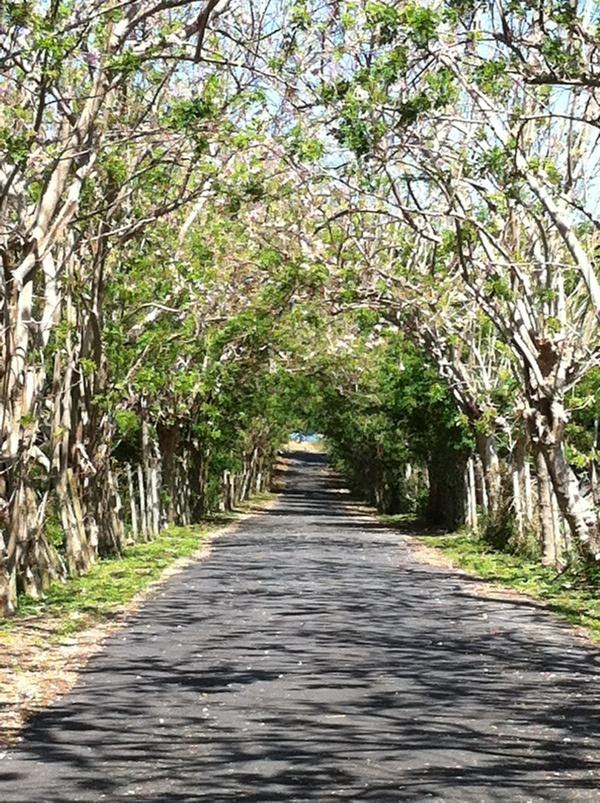 Best 25 Isabela Puerto Rico Ideas On Pinterest Puerto Rico Puerto Rico Island And Puerto