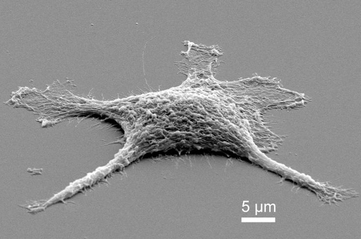 """#Zombie Replicants to Outperform the Living   The first stage of the """"zombie cell"""" only moderately heated, the cell is now pure #silica and needed a gold coating for a scanning electron microscope to image it."""