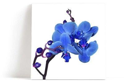 Blå orkide veggbilde