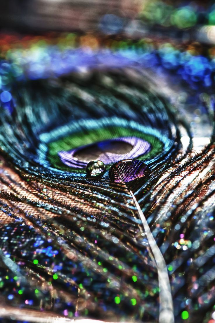 Peacock Feather Drop HDR Macro by Creative--Dragon.deviantart.com on @deviantART