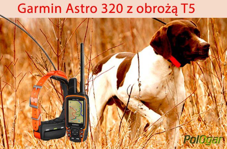 Garmin Astro 320 Z Obrożą T 5  www.pologar.pl (Śledzenie + Sygnalizacja Świetlna Za Pomocą Diody), Dla psów myśliwskich Garmin z GPS