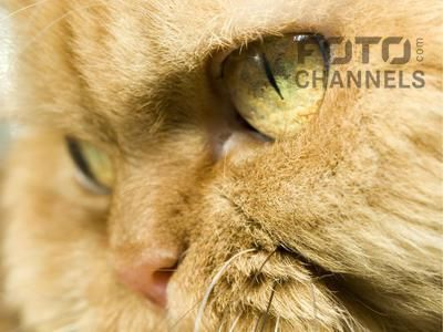 Fotochannels - green eyes