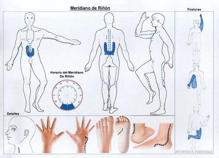 Meridiano de riñón