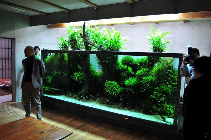 Aquarium, Planted aquarium and Tanks on Pinterest