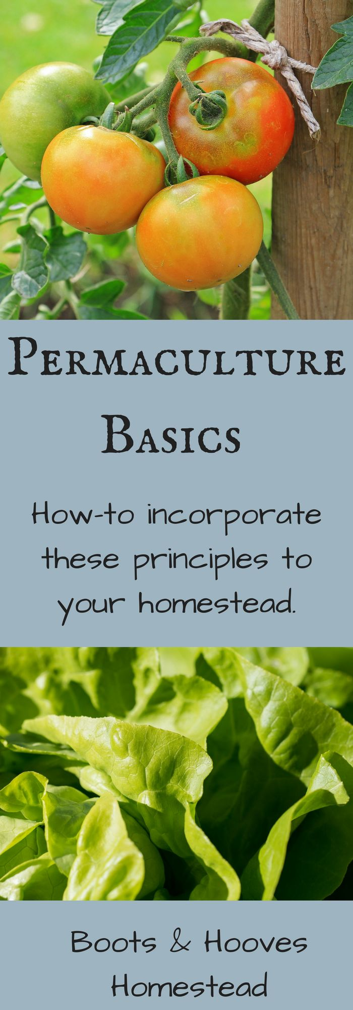 Giving Permaculture a Try - Boots & Hooves Homestead