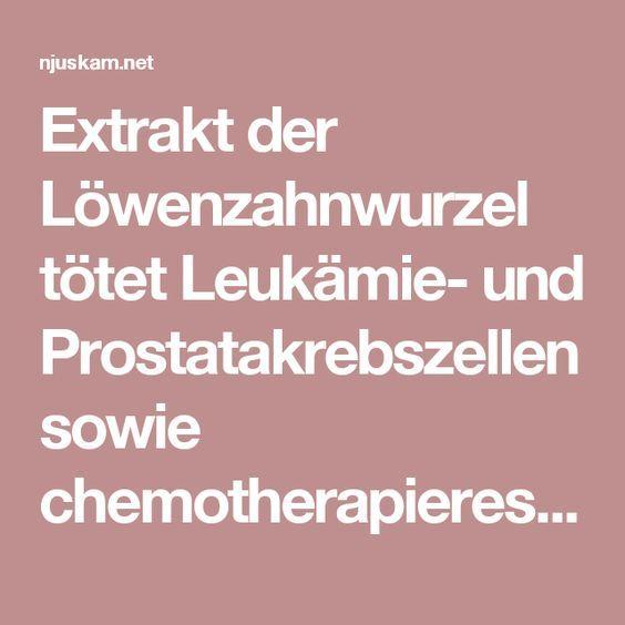 Extrakt der Löwenzahnwurzel tötet Leukämie- und Prostatakrebszellen sowie chemotherapieresistente Melanome | njuskam.net