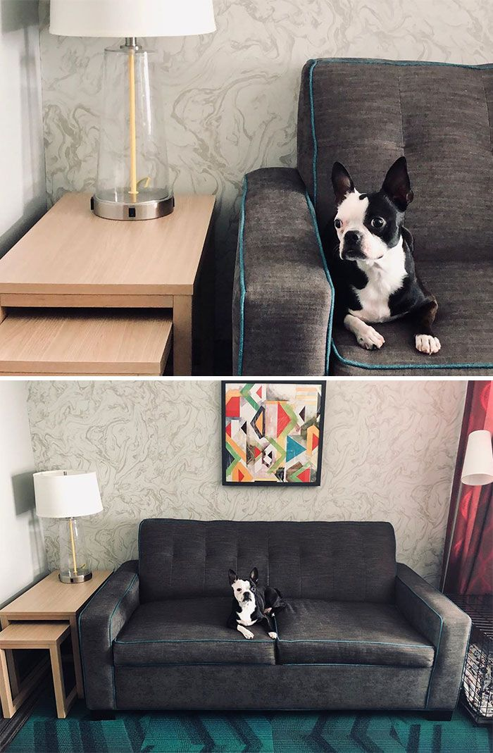 Hotel Guests Foster Dogs Adoption In 2020 Foster Dog Foster Dog Mom Dog Adoption