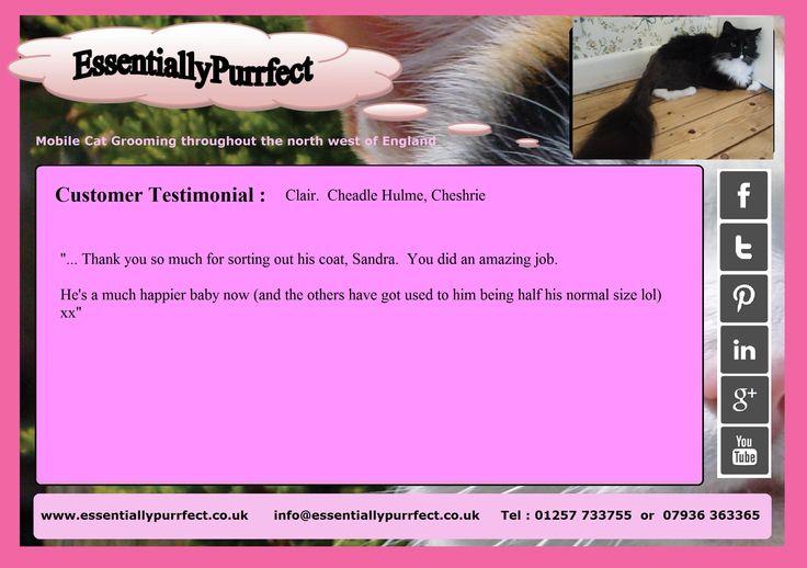 Customer Testimonial of EssentiallyPurrfect #mobile #cat #catgrooming service.  Clair #Cheadle #Stockport #Cheshire