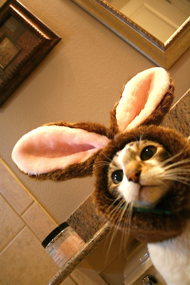 230 best Easter cats images on Pinterest   Animals, Happy easter ...