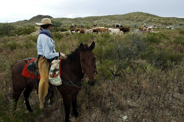 22 best Bring Your Own Horse Vacations images by ...