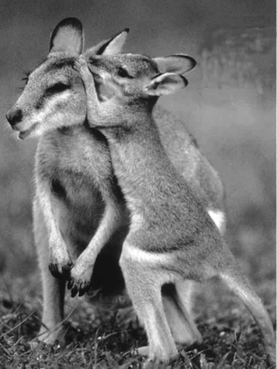 I want to tell you a secret...: Animal Baby, Critter, Polar Bears, Bears Cubs, Kangaroos, Australia, Baby Wallabi, Baby Animal, The Secret