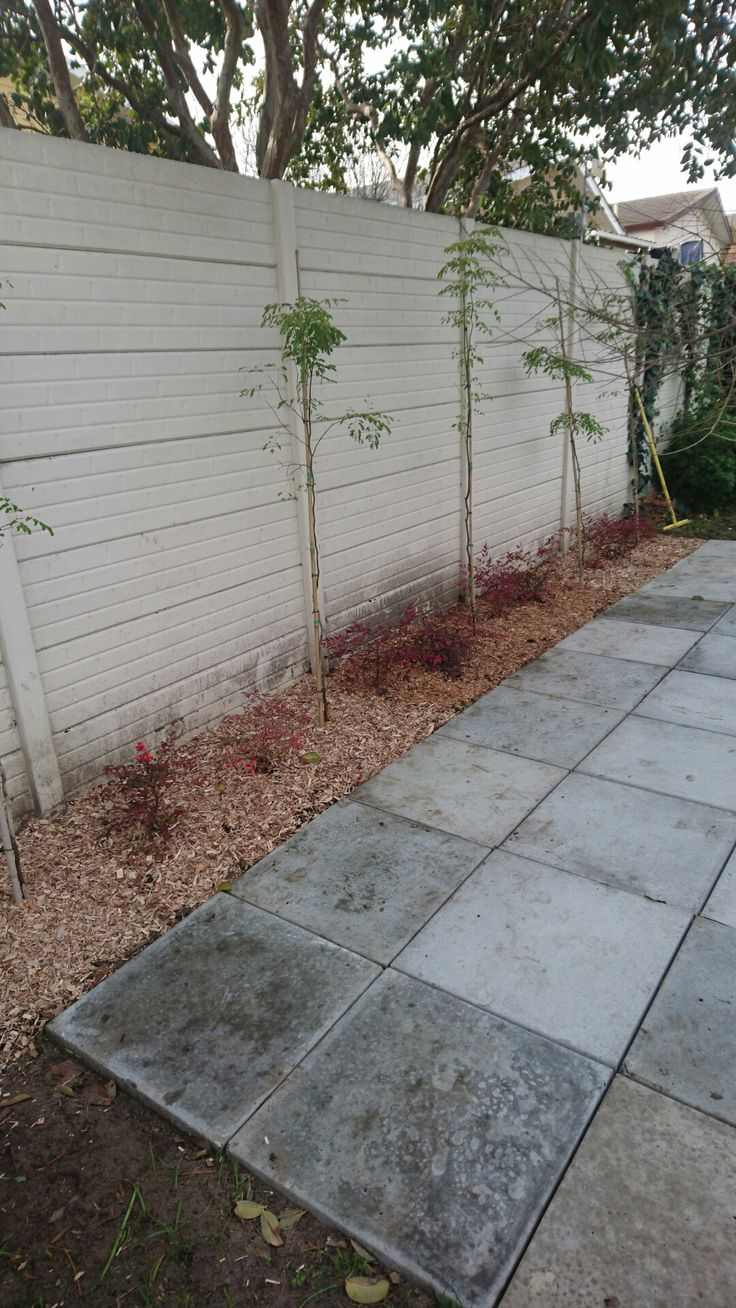 Then planted trees and sacred bamboo