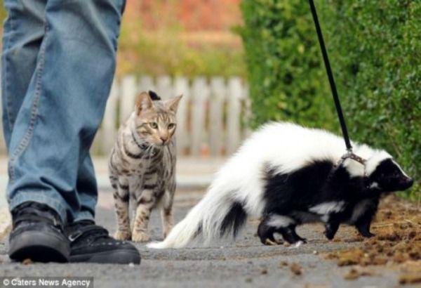 Teneri cuccioli Notizie: Una puzzola è l'animale domestico di una famiglia ...