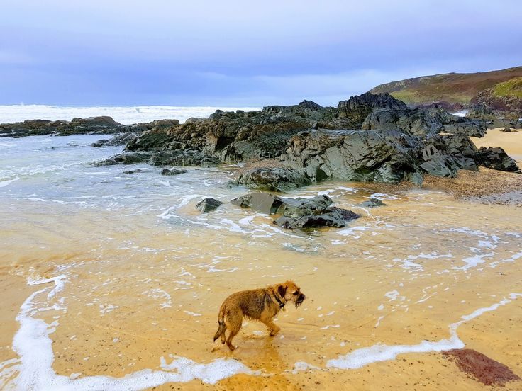 "Ted Border Terrier on Twitter: ""Fun on the beach #btposse https://t.co/KilIIZPv6w"""