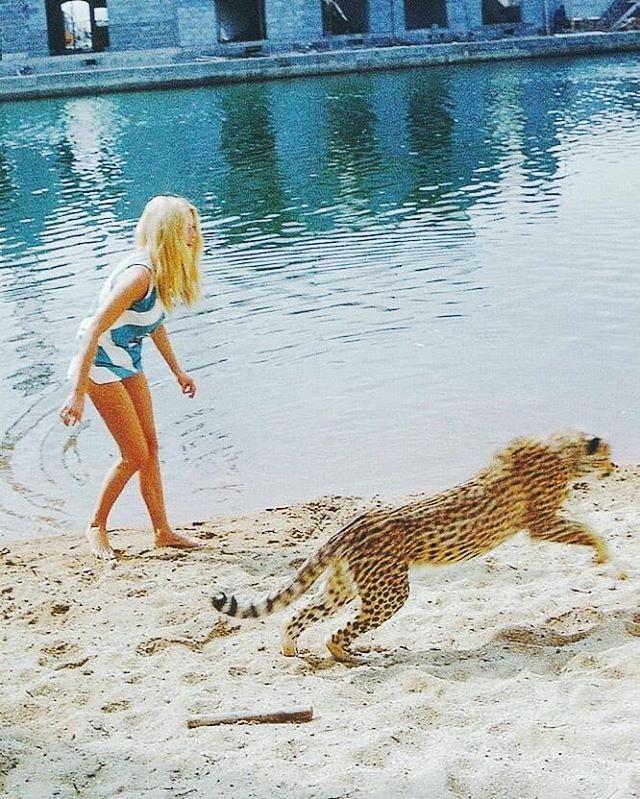 "527394017f Brigitte Bardot 👑 BB on Instagram: ""Brigitte Bardot plays with a cheetah  🐆 c. 1966. #brigittebardot #brigitte #bardot #bb #cheetah #jaguar #leopard"""