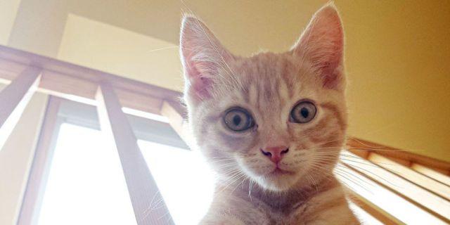 Una ricerca svela che probabilmente il tuo gatto sta meditando di ucciderti -cosmopolitan.it