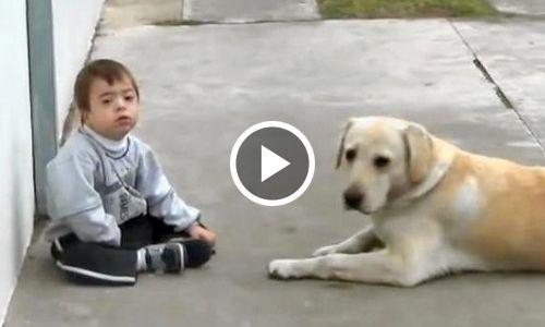 Лабрадор и мальчик с синдромом Дауна – реакция пса поражает до глубины души