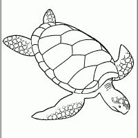 Zeeschildpad 6de eendje, -10 kleine rubber eendjes, Eric Carle-