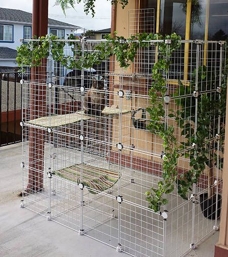 Beautiful Best 25+ Outdoor Cat Enclosure Ideas On Pinterest | Catio, Cat Enclosure  And Catio Ideas For Cats