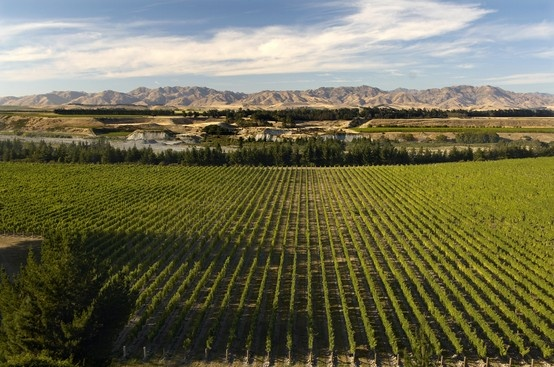 Marlborough = Sauvignon Blanc country! With so many Marlborough wineries to choose from, take advantage of a pre-arranged wine tour with a local tour operator so you can fit more in!