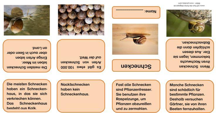 Schnecken- Faltbüchlein.pdf