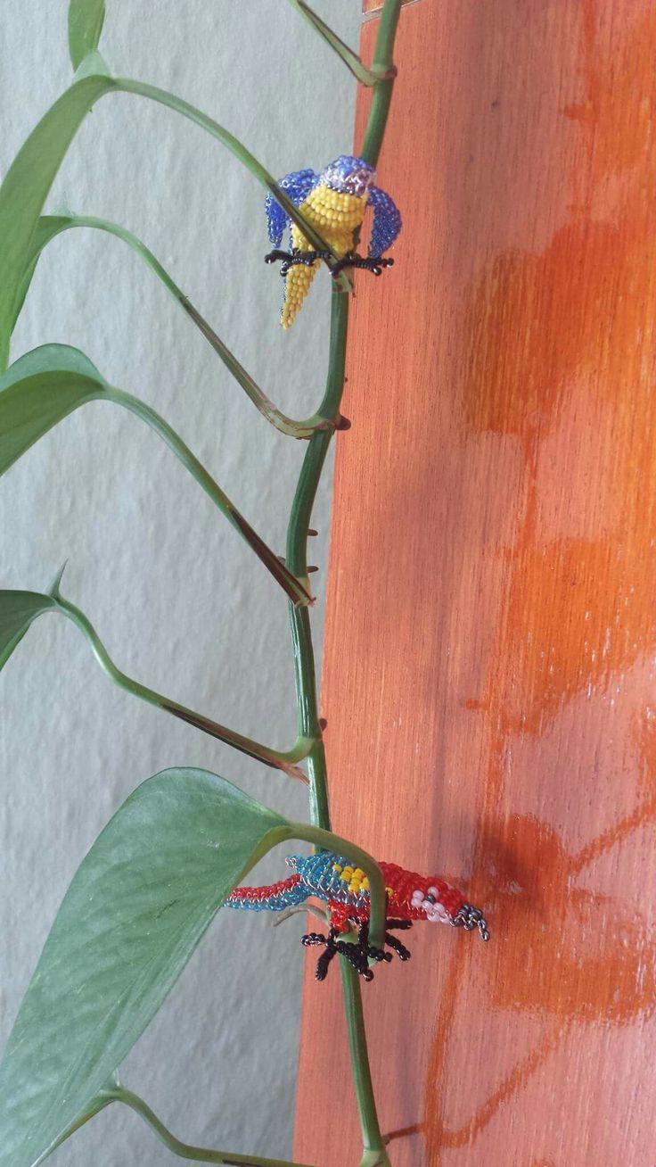 Papagájok a szobanövényen / parrots