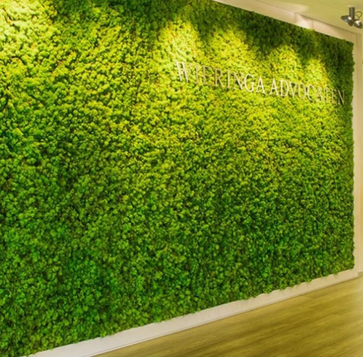 Image Result For Moss Wall Living Green Walls Green Office Decor Plant Wall