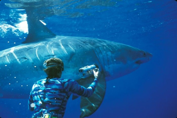 Come face to face with great white sharks in south Africa. 5 Andrenalin Charged Vacations page 31 of REVIVE spring issue.