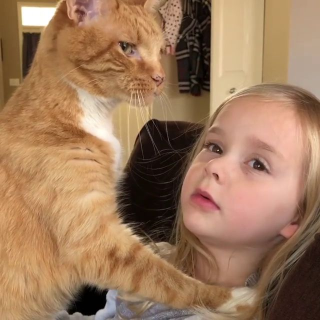 Does this mean we are Best Friends Now? – Katzen