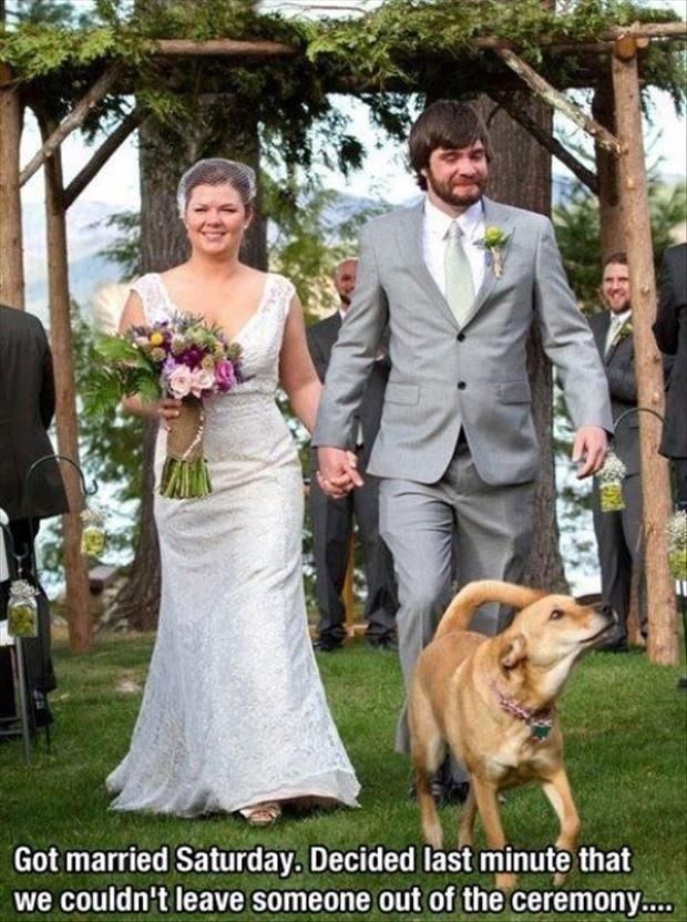 Best Funny Wedding Pictures Images On Pinterest Photography - Funny dog wedding photos will make your day