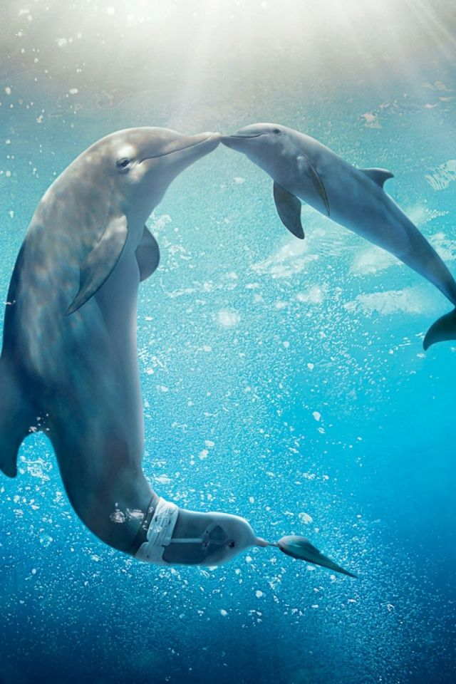 Dolphin Tale Mobile Wallpaper - Mobiles Wall | Dolphins ...