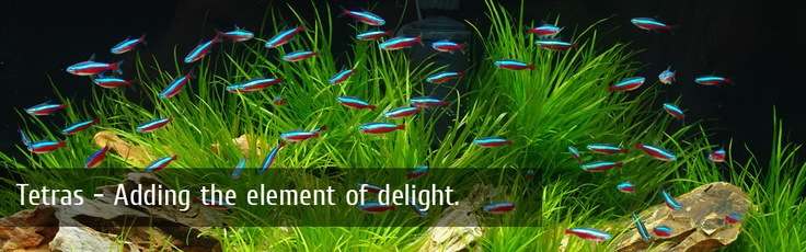 Pretty fishes in an incredibly beautiful aquarium!: Exotic Aquariums, School, Beautiful Aquarium, Pretty Fishes